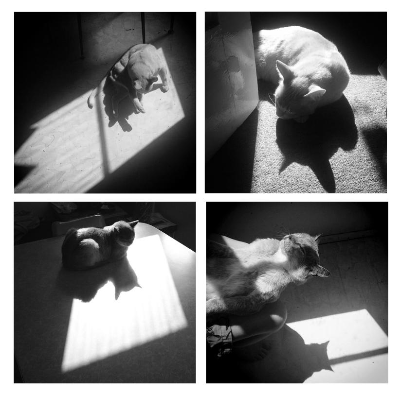 Cat_Shadow